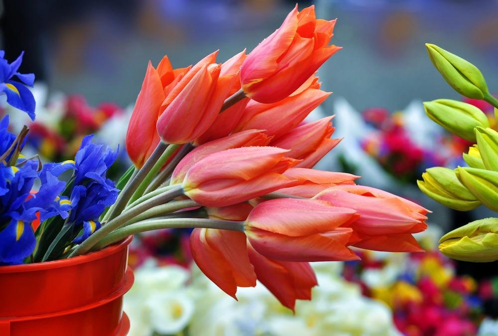 London Markets - Columbia Road Flower Market
